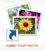 Photography Jobs Online submit your photos icon