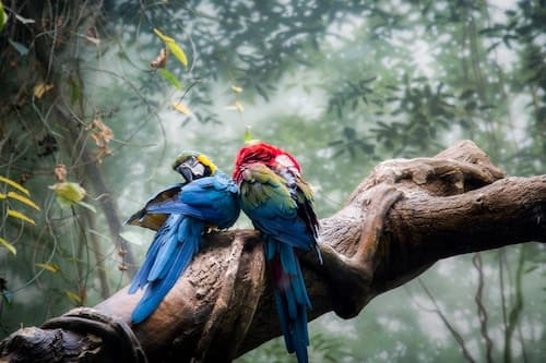 two colorful parrots on a tree branch in the jungle in tropical jungle