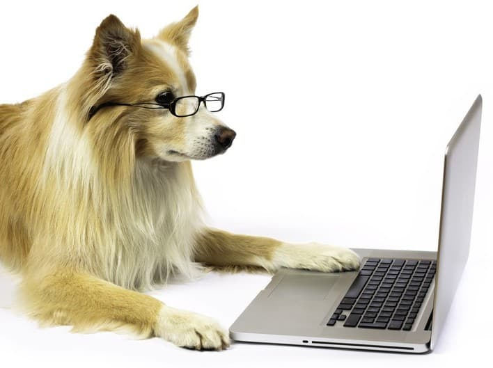 collie with glasses on laptop